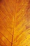 Конец лист осени вверх Стоковое Изображение RF