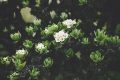 Конец красивой весны дерева белых цветков сезонный вверх Стоковое фото RF