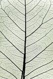 Конец листьев вала вверх Стоковое Фото