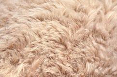 Конец меха овец вверх по предпосылке текстуры Стоковые Изображения RF