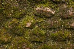 Конец мха покрыл старую каменную стену, улучшает для предпосылок и кон стоковая фотография rf