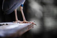 Конец ноги цапли ночи вверх стоковое изображение rf