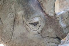 Конец носорога вверх стоковая фотография