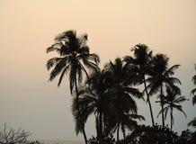 Конец дня - пальмы в небе вечера - естественная предпосылка Стоковая Фотография RF
