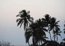 Конец дня - пальмы в небе вечера - естественная предпосылка Стоковые Изображения