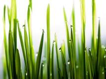 конец падает свежая трава вверх по воде Стоковые Изображения