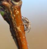 Конец паука Брайна вверх Стоковое Фото