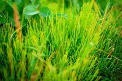 конец падает свежая трава толщиной вверх по воде Стоковая Фотография RF