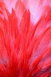 Конец пера фламинго вверх Стоковые Фото