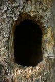Конец полости дерева вверх, вертикальное изображение стоковое фото rf