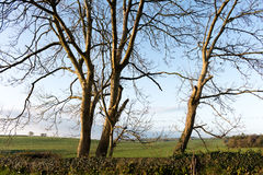 Конец поднимающего вверх деревьев Стоковое Фото