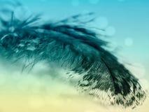 Конец предпосылки текстуры пера желтого цвета бирюзы птицы вверх стоковое изображение