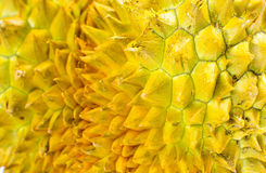 Конец раковины плодоовощ дуриана острый вверх Стоковая Фотография