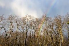Конец радуги через деревья Стоковое Изображение RF
