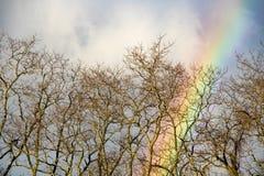 Конец радуги через деревья Стоковые Изображения