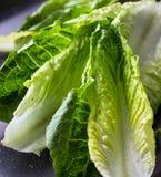 Конец салата Romaine вверх по фото стоковая фотография rf