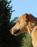 Конец стороны собаки вверх Стоковое фото RF