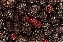 Конец съемки предпосылки ягоды вверх Стоковая Фотография