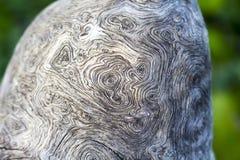 Конец текстуры ствола дерева вверх по фото Белая и серая деревянная предпосылка Стоковое Изображение RF