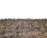 Конец текстуры Bulrush вверх Текстура сухих тростников Желтые тростники Крыша сделанная тростников или bulrush открытый космос стоковые фото