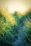 Конец травы дюн пляжа вверх Стоковое Фото