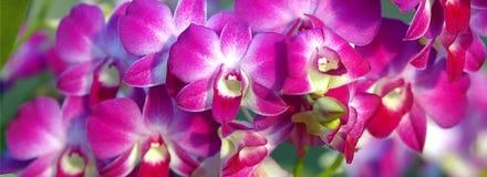 конец цветет орхидея вверх Стоковое Изображение RF