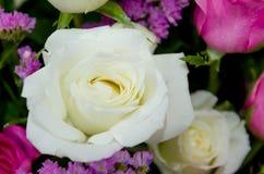 Конец цветка белой розы вверх стоковые фото