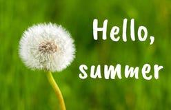 Конец цветка одуванчика вверх против предпосылки травы лета Здравствуйте текст лета стоковое изображение rf