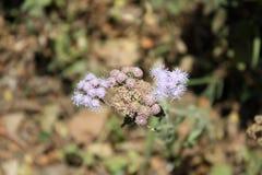 Конец цветка с иллюзией ее плавая Стоковое Изображение RF