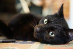 Конец черного кота вверх с зелеными глазами Стоковая Фотография RF