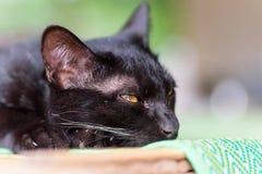 конец черного кота вверх Стоковые Изображения