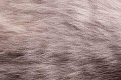Конец шерсти кота вверх Стоковая Фотография RF