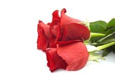 конец dof букета предпосылки изолировал белизну красных роз отмелую поднимающую вверх Стоковое Фото