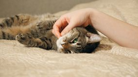 конец 4K вверх по рукам игр девушки с котом tabby спать милым видеоматериал