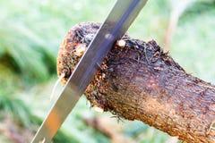 Конец sawing дерева Стоковая Фотография RF