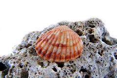 Конец seashell природы вверх стоковое фото