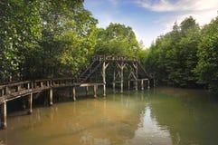 Конкретная дорожка в лесе мангровы на острове Chang Koh стоковые изображения