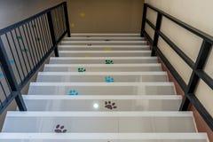 Конкретная лестница с следом ноги животных Стоковое Фото