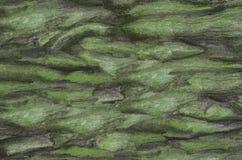 конкретная текстура Стоковые Фото