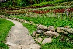 Конкретная тропа в саде Стоковая Фотография