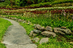 Конкретная тропа в саде Стоковые Фотографии RF