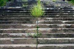 Конкретные лестницы, стоковые фото