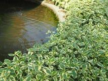 Конкретные пруды и водоросли Стоковое Изображение