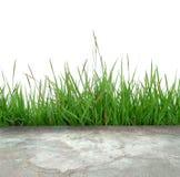 конкретный зеленый цвет травы пола Стоковая Фотография RF