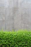 Конкретный пол с зелеными листьями Стоковая Фотография RF