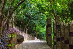 Конкретный путь, положенный в рай Fo залива Yalong леса троповый Стоковая Фотография RF