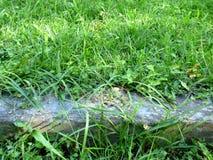Конкретный шнурок окруженный травой Стоковые Изображения RF