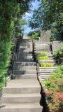 конкретный stairway Стоковое Изображение
