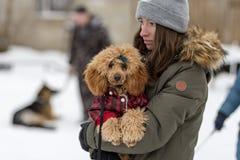 Конкуренция для собак, потеха начинает в зиме, редакционной стоковые фото