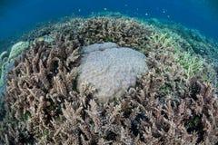 Конкуренция кораллового рифа Стоковое фото RF